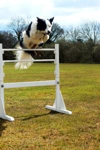 Izzy hurdle