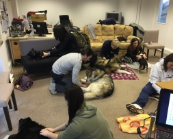 Dog massage classes