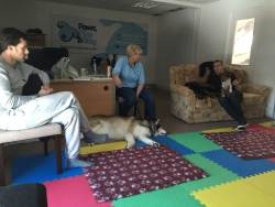 AchyPaw canine workshops
