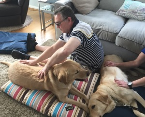 Guide Dog Massage training at AchyPaw