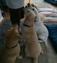 Guidedog massage training at AchyPaw