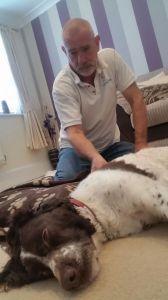 AchyPaw Dog Massage