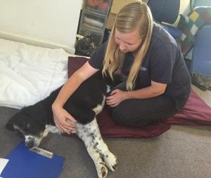 AchyPaw Dog Massage training service