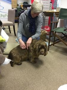 AchyPaw Canine Massage classes