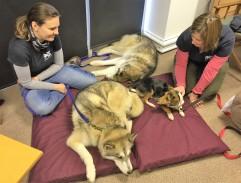 AchyPaw Dog Massage classes