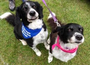 AchyPaw @ Eastbourne Dog Show 2016