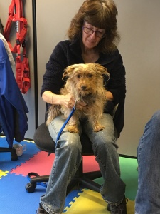 AchyPaw Dog Massage workshops at Paws, Play & Stay